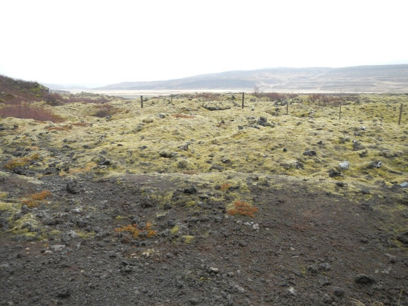 No more views of extensive lava fields, covered with over 400 species of moss that take 300 years to grow even just a little bit.