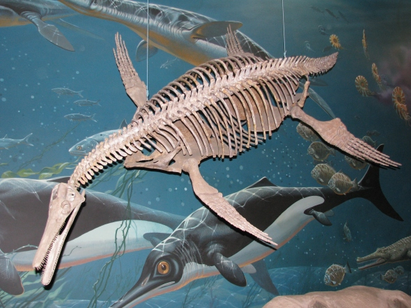 A pliosaur from the Late Cretaceous Period - this one, uncovered in Montana.