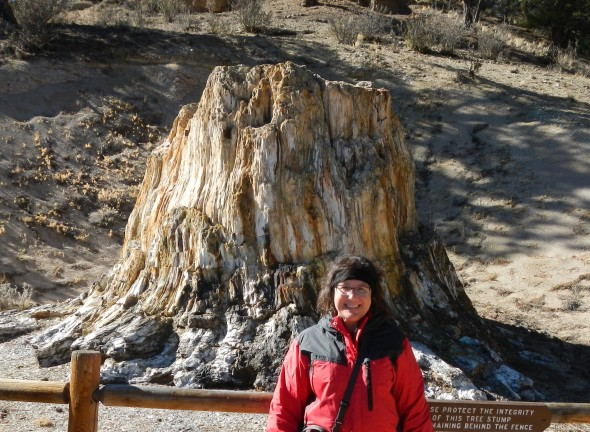 That's me, standing in front of Big Stump