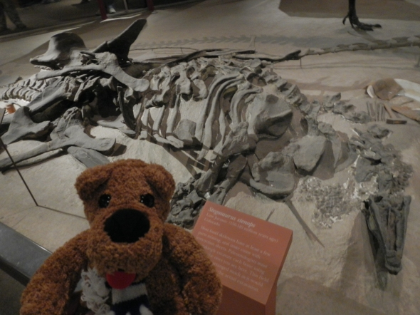 "My Nittany Lion, with the Stegosaurus ""road kill"""